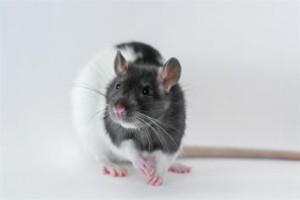 rotte1_eivindsennesethuib